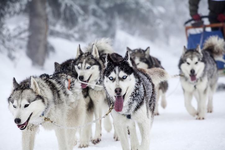 Cuales son los deportes de invierno musching
